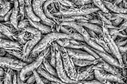 Jambalaya Prints - Tile of shrimps Print by Dobromir Dobrinov