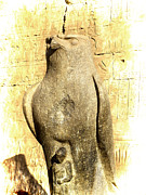 Hathor Prints - Timeless Horus Print by Brenda Kean