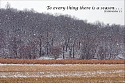 King James Posters - To every thing there is a season Poster by Nikolyn McDonald