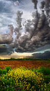Phil Koch Framed Prints - Track 8 Framed Print by Phil Koch