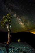 Mike Lee Metal Prints - Tree Amongst the Stars Metal Print by Mike Lee