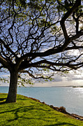 Hickam Photos - Tree Canopy II by Gina Savage