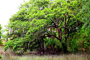 Oak Creek Photo Originals - Tree in the Marsh by Kay Mathews