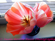 New England. Pyrography Prints - Tulips Print by Susan Russo