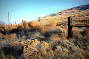 Yakima Valley Photo Prints - Tumbling Tumbleweeds Print by Carol Groenen