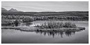 Pond Reflection Prints - Tundra Pond Reflections Print by Priska Wettstein