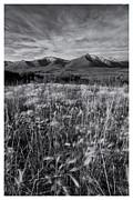 White And Black Landscapes Framed Prints - Tundra Summer Framed Print by Priska Wettstein
