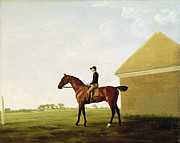Racehorse Paintings - Turf by George Stubbs