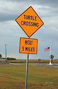 Suzanne Gaff - Turtle Crossing
