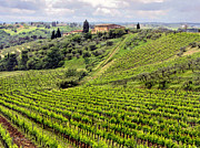 Tuscan Traditions Prints - Tuscany-Italy Print by Jennie Breeze