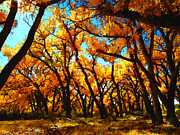 Flyfishing Prints - Under Autumn Cottonwoods Print by Karl Moffatt