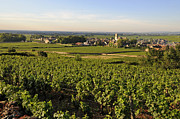 Des Photo Framed Prints - Vineyard and village of Pommard. Cote dOr. Route des grands crus. Burgundy.France. Europe Framed Print by Bernard Jaubert