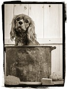Edward Fielding - Vintage Puppy Bath