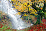 Mikel Martinez de Osaba - Waterfall In Autumn With Tree