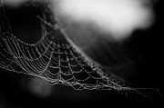 Spider Web Framed Prints - Web Hammock Framed Print by Shane Holsclaw