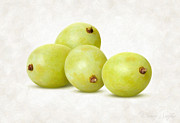 Single Object Painting Posters - White Grapes Poster by Danny Smythe