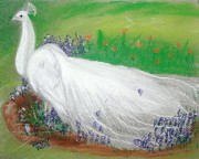 Peacock Pastels Metal Prints - White Peacock Metal Print by Robyn Hapner