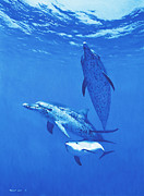 Sporting Art Prints - White Sand Ridge - Atlantic Spotted Dolphins Print by Randall Scott