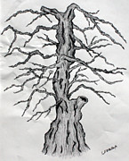 Pen And Ink Drawing Prints - Wicked Tree Print by Fred Miller