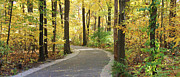 Wildwood Park Prints - Wildwood Path Print by Jack Schultz