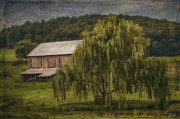 Weeping Willow Photos - Willow Farm by Kathy Jennings