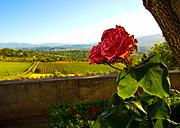 Vineyard Art Prints - Wilting Rose Print by William Chizek
