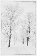 Black And White Digital Art Posters - Winter road Poster by Veikko Suikkanen