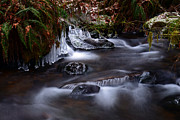Tim Moore Metal Prints - Winter Whispers Metal Print by Tim Moore