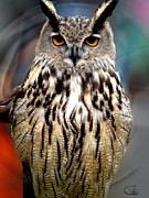 Canvasprint Framed Prints - Wise Forest Owl 2 Almeria Spain  Framed Print by Colette V Hera  Guggenheim