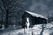 Sight Hound Framed Prints - Woolf Like Hound In Cold Winter Landscape Framed Print by Christian Lagereek