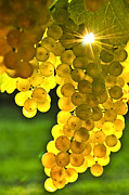 Grape Leaf Framed Prints - Yellow grapes Framed Print by Elena Elisseeva