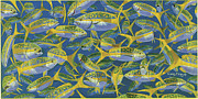 Carey Chen - Yellowtail Frenzy In0023