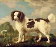 George Stubbs -  Brown and White Norfolk or Water...