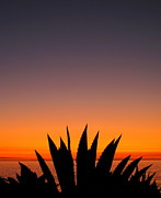 Surf Silhouette Prints - Agave Sunset Print by Linda Marshutz