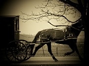 Amish Framed Prints - Amish Buggy  Framed Print by Michael L Kimble