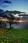 Autumn In The Country Prints - Apple Tree Before Sunset Print by Bruno Santoro