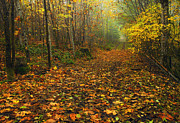 Wooded Originals - Autumn Lane by Mike  Dawson