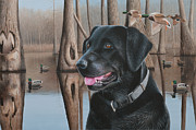 Clarence Stewart - Black Lab in a Marsh