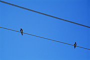 World Cities Posters - Couple of birds perching on electric power lines Poster by Sami Sarkis