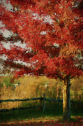 Digital Collage Photo Posters - Digital painting maple tree in full color Poster by Sandra Cunningham