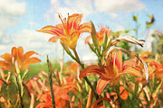 Green Day Art - Digital painting of orange daylilies by Sandra Cunningham