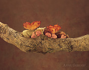 Autumn Metal Prints - Fairies Metal Print by Anne Geddes