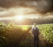 Sandra Cunningham - Farmer walking in corn fields at sunset