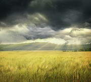 Sandra Cunningham - Field of wheat with ominous clouds