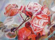 Tim Houghton - Frost on Kashmiri Roses