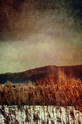 Haunted Photo Posters - Frosty field in late winter afternoon Poster by Sandra Cunningham
