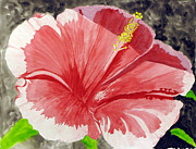 Singer Painting Originals - Happy Hibiscus by Debi Singer
