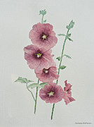 Barbara McMahon - Hollyhocks