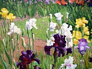 Impressionism Oil Paintings - Jardin Des Iris by Roelof Rossouw