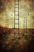 Sandra Cunningham - Ladders reaching to the sky in a autumn...